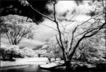 Cokin A Series Infrared Filter A007